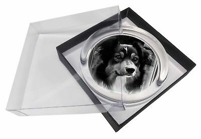 Border Collie in Window Glass Paperweight in Gift Box Christmas Prese, AD-CO70PW