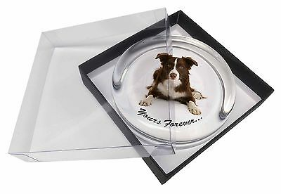 "Liver and White Border Collie ""Yours Forever..."" Glass Paperweight i, AD-CO81yPW"