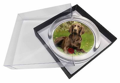 German Shorthaired Pointer with Red Rose Glass Paperweight in Gift B, AD-GSP1RPW