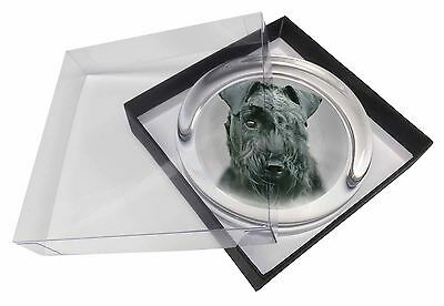 Kerry Blue Terrier Dog Glass Paperweight in Gift Box Christmas Present, AD-KB1PW