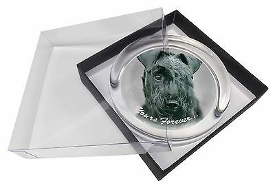 Kerry Blue Terrier 'Yours Forever' Glass Paperweight in Gift Box Chri, AD-KB1yPW