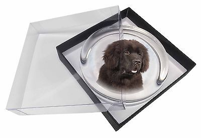 Newfoundland Dog Glass Paperweight in Gift Box Christmas Present, AD-NF1PW