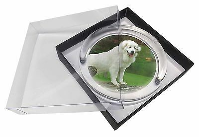 Pyrenean Mountain Dog Glass Paperweight in Gift Box Christmas Present, AD-PM1PW