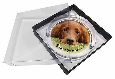 Red Setter Dog 'Yours Forever' Glass Paperweight in Gift Box Christma, AD-RS2yPW