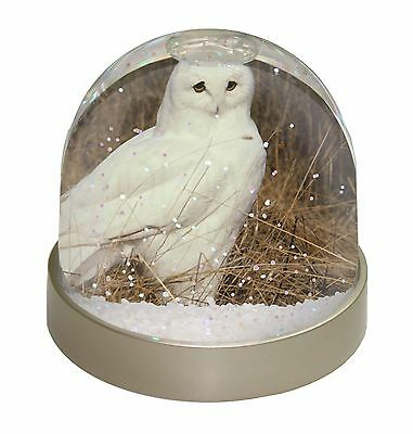 White Barn Owl Photo Snow Dome Waterball Stocking Filler Gift, AB-O67GL