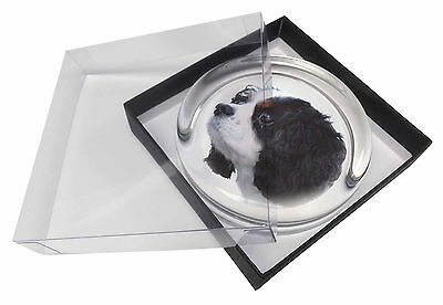 Tri-Colour King Charles Spaniel Dog Glass Paperweight in Gift Box Chr, AD-SKC6PW