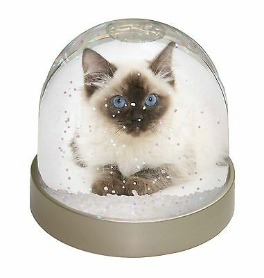 Ragdoll Cat with Blue Eyes Photo Snow Dome Waterball Stocking Filler G, AC-159GL