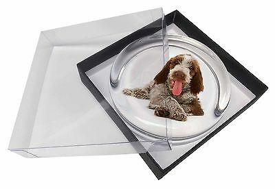 Italian Spinone Dog Glass Paperweight in Gift Box Christmas Present, AD-SP2PW