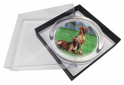 Hungarian Vizslas Glass Paperweight in Gift Box Christmas Present, AD-V1PW