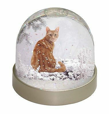 Ginger Winter Snow Cat Photo Snow Dome Waterball Stocking Filler Gift, AC-63GL