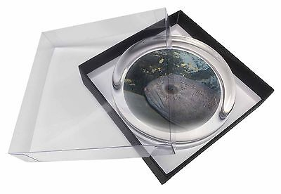 Ugly Fish Glass Paperweight in Gift Box Christmas Present, AF-26PW