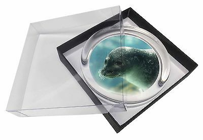 Sea Lion Glass Paperweight in Gift Box Christmas Present, AF-S1PW
