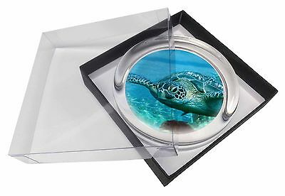 Turtle by Coral Glass Paperweight in Gift Box Christmas Present, AF-T20PW