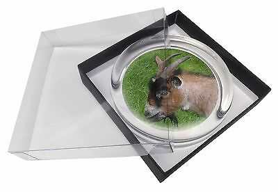 Cheeky Goat Glass Paperweight in Gift Box Christmas Present, AGO-1PW