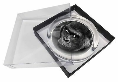 Handsome Silverback Gorilla Glass Paperweight in Gift Box Christmas Pres, AM-6PW