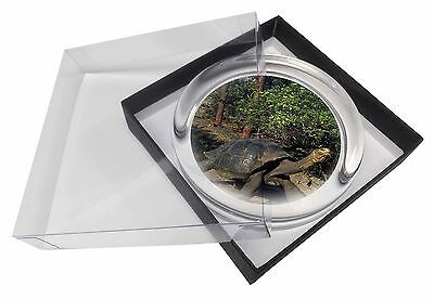 Giant Galapagos Tortoise Glass Paperweight in Gift Box Christmas Prese, AR-T10PW