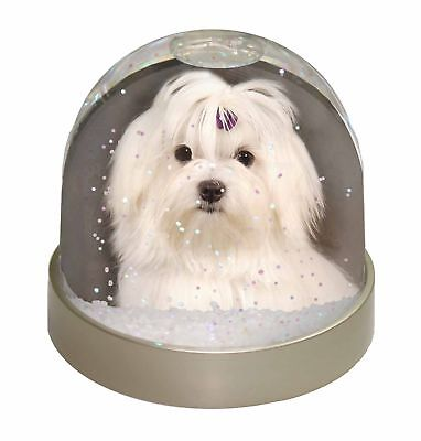 Maltese Dog Photo Snow Dome Waterball Stocking Filler Gift, AD-M1GL