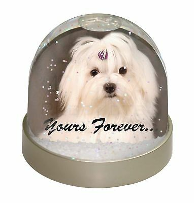 Maltese Dog 'Yours Forever' Photo Snow Dome Waterball Stocking Filler , AD-M1yGL