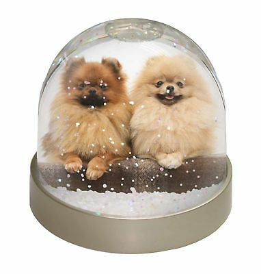 Pomeranian Dogs Photo Snow Dome Waterball Stocking Filler Gift, AD-PO91GL