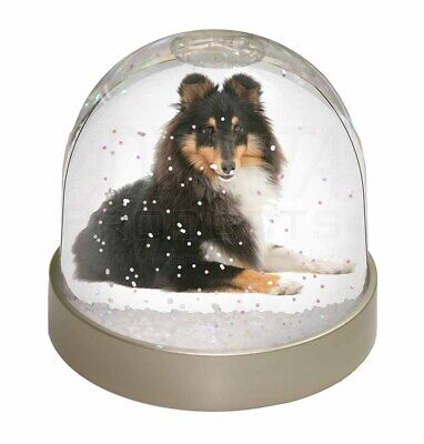 Tri-Col Sheltie Dog Photo Snow Dome Waterball Stocking Filler Gift, AD-SE1GL