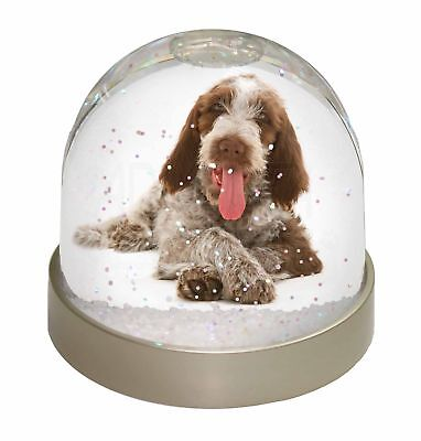 Italian Spinone Dog Photo Snow Dome Waterball Stocking Filler Gift, AD-SP2GL