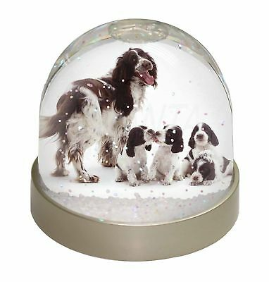 Springer Spaniel Dogs Photo Snow Dome Waterball Stocking Filler Gift, AD-SS12GL