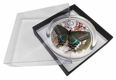 Black and Blue Butterfly Glass Paperweight in Gift Box Christmas Presen, IBU-4PW