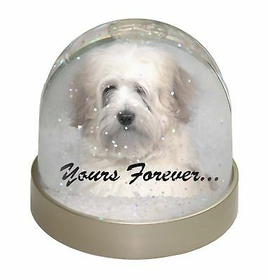 Tibetan Terrier 'Yours Forever' Photo Snow Dome Waterball Stocking Fi, AD-TT1yGL