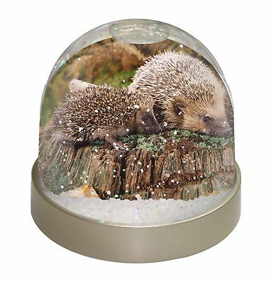 Mother and Baby Hedgehog Photo Snow Dome Waterball Stocking Filler Gift, AHE-5GL