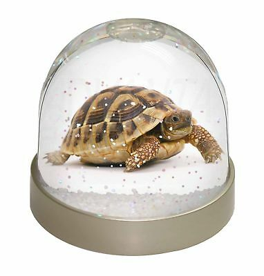A Cute Tortoise Photo Snow Dome Waterball Stocking Filler Gift, AR-T16GL