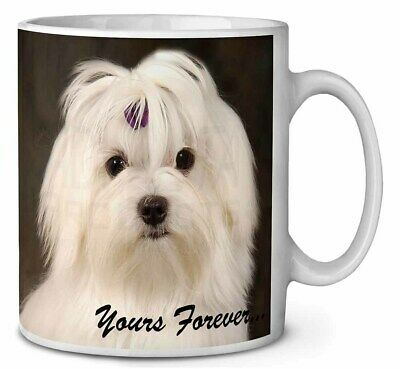 Maltese Dog 'Yours Forever' Coffee/Tea Mug Christmas Stocking Filler G, AD-M1yMG