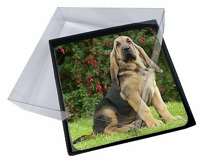 4x Bloodhound Dog Picture Table Coasters Set in Gift Box, AD-BL1C