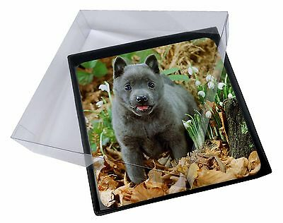 4x Blue Schipperke Dog Picture Table Coasters Set in Gift Box, AD-BS1C
