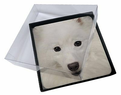 4x Japanese Spitz Dog Picture Table Coasters Set in Gift Box, AD-JS1C