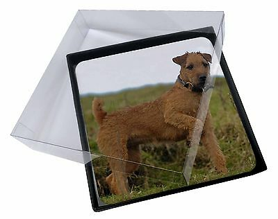 4x Lakeland Terrier Dog Picture Table Coasters Set in Gift Box, AD-LT1C