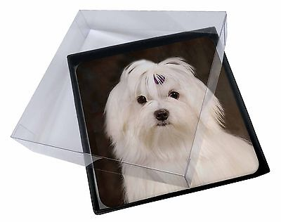 4x Maltese Dog Picture Table Coasters Set in Gift Box, AD-M1C