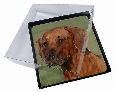 4x Rhodesian Ridgeback Dog Picture Table Coasters Set in Gift Box, AD-RR1C