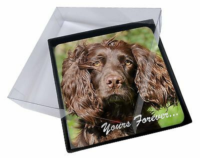 4x Chocolate Spaniel 'Yours Forever' Picture Table Coasters Set in Gif, AD-SC4yC