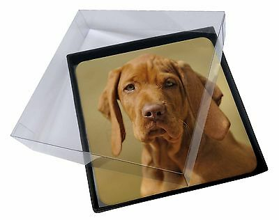 4x Hungarian Vizsla Dog Picture Table Coasters Set in Gift Box, AD-V2C