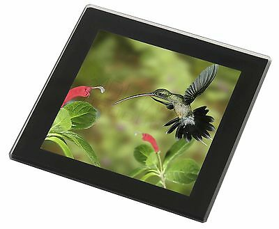 Green Hermit Humming Bird Black Rim Glass Coaster Animal Breed Gift, AB-95GC