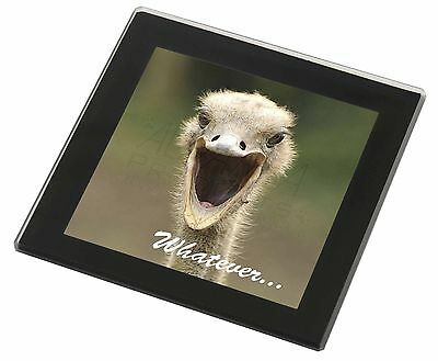 Ostritch with 'Whatever' Black Rim Glass Coaster Animal Breed Gift, AB-OS2GC