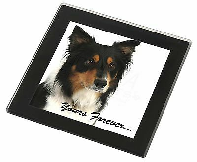 "Tri-colour Border Collie Dog ""Yours Forever..."" Black Rim Glass Coas, AD-CO33yGC"
