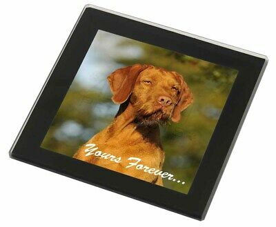 Wirehair Vizsa 'Yours Forever' Black Rim Glass Coaster Animal Breed , AD-HWV1yGC