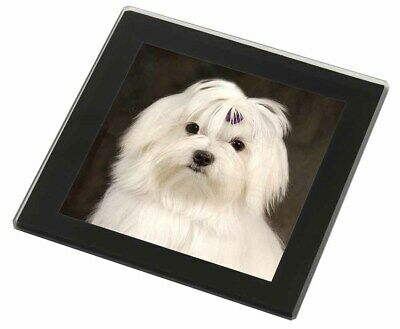 Maltese Dog Black Rim Glass Coaster Animal Breed Gift, AD-M1GC