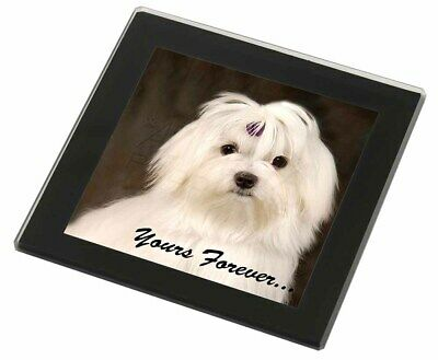 Maltese Dog 'Yours Forever' Black Rim Glass Coaster Animal Breed Gift, AD-M1yGC