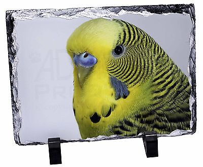 Yellow Budgerigar, Budgie Photo Slate Christmas Gift Ornament, AB-51SL
