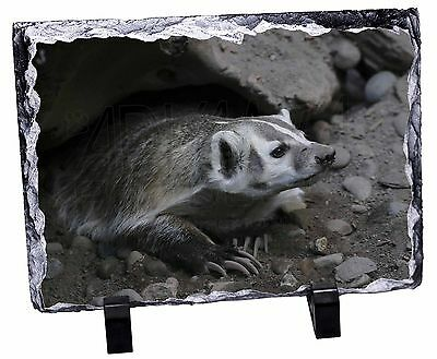 Badger on Watch Photo Slate Christmas Gift Ornament, ABA-2SL