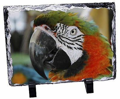 Face of a Macaw Parrot Photo Slate Christmas Gift Ornament, AB-PA75SL