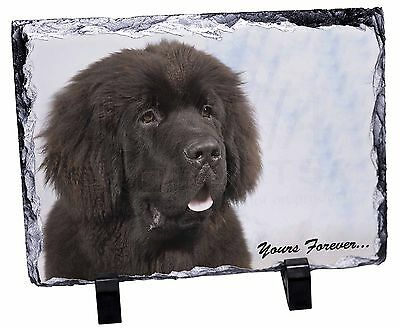 Newfoundland Dog 'Yours Forever Photo Slate Christmas Gift Ornament, AD-NF3SL