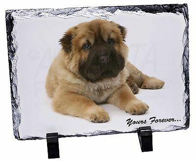 Shar-Pei Puppy 'Yours Forever' Photo Slate Christmas Gift Ornament, AD-SH3SL